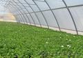 Теплицы промышленные для фермеров