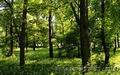 земельный участок 50 сот. в сосновом лесу в напр. с.Д-Городище
