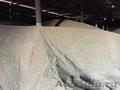 Пшеница 3, 4, 5 класса без пророста по ГОСТ. В наличии также Кукуруза,  ячмень
